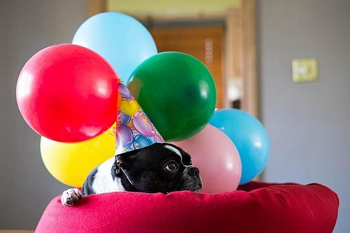 photo of dog with baloons and party hat